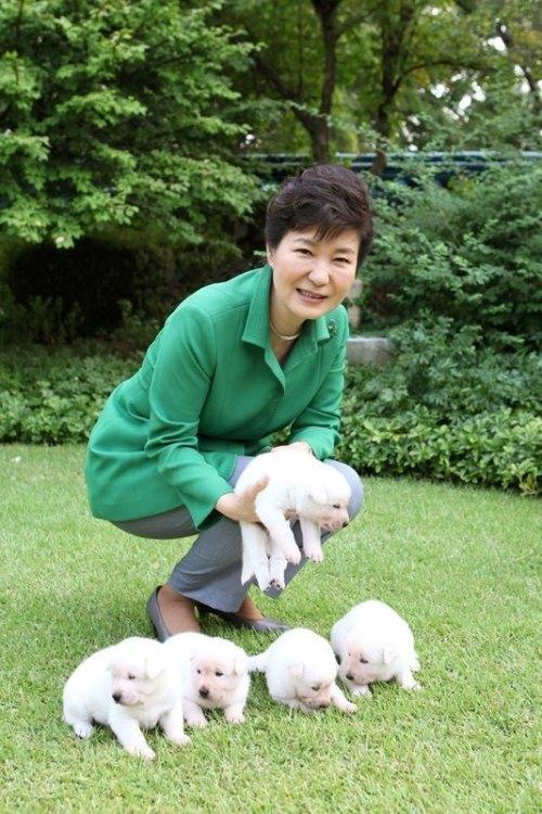 park-geun-hye_chiens_jindo_bien-être-animal